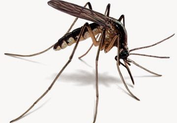 Mosquito Here, Mosquito There.